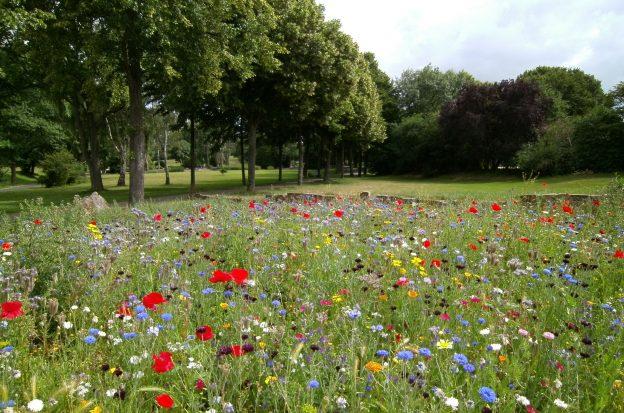Wildflower test area